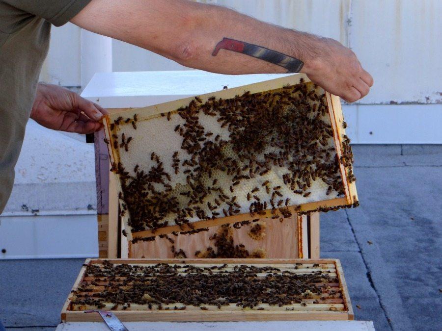 Portland artisan honey
