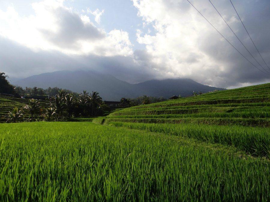 Honeymoons in Bali