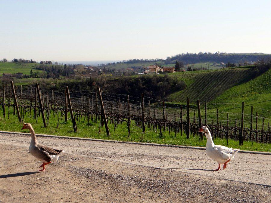 organic farms in Italy