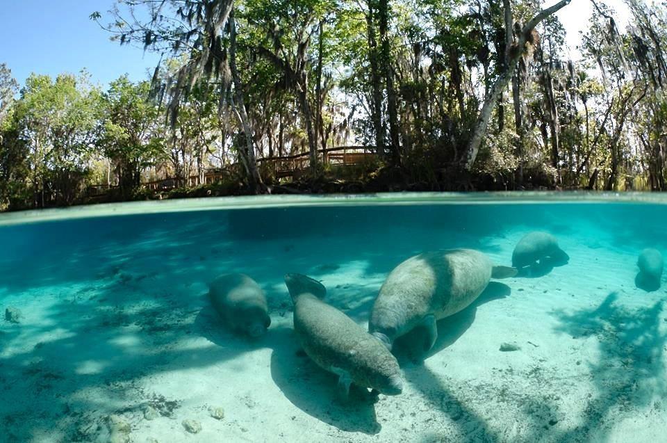 how to treat marine mammals in the wild