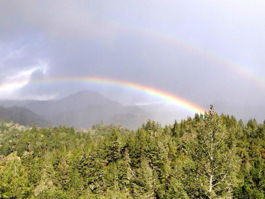 California rainbows