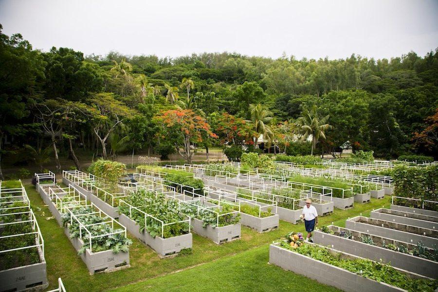 Solar Farm on Turtle Island