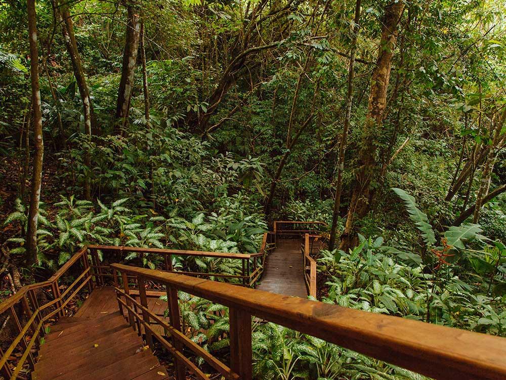 healing in Cosa Rica